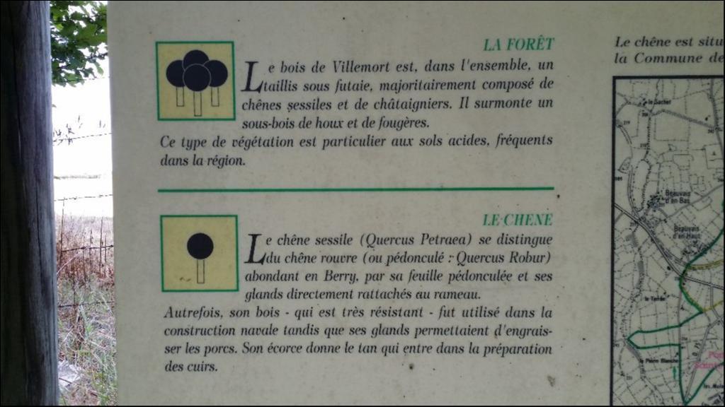 Le bois de Villemort